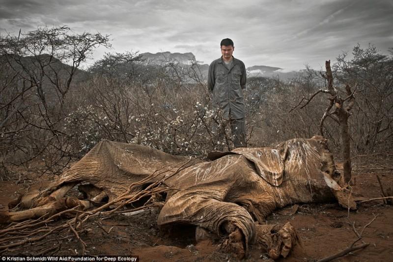 bracconieri elefante morto